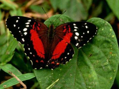 20091110141519-mariposa2.jpg